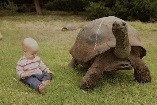 2012-02-13_Tortoise.JPG