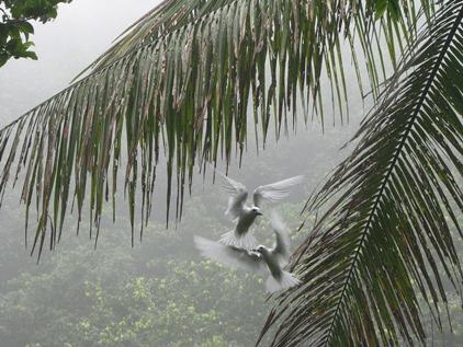 2013-04-05_cocos_birds_foto-guiermo.jpg