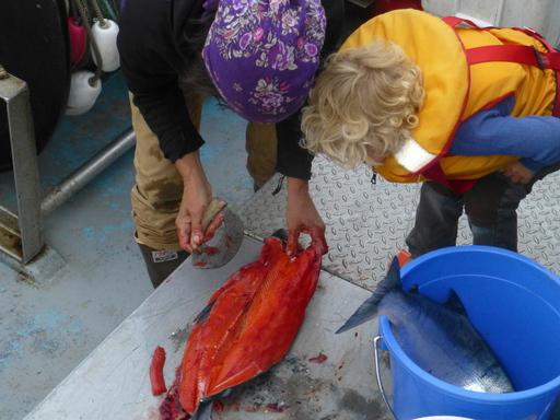 2014-07-05_usa_alaska_pws_main-bay_chris-noe-salmon.JPG