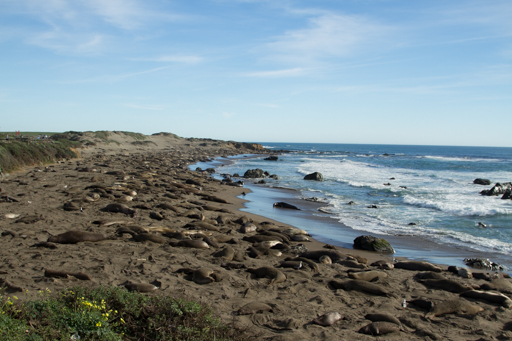 2015-02-11_usa-hwy1-california_elephant-seals.jpg