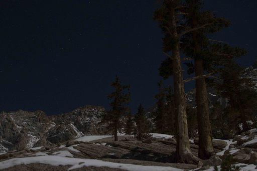 2014-11-08_usa-california_trees-on-whitney-trail