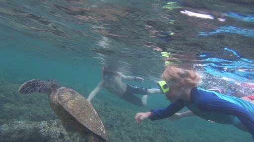 2016-06-22_usa-hawaii-kauai_snorkeling-with-turtle-Noe-Andri.JPG
